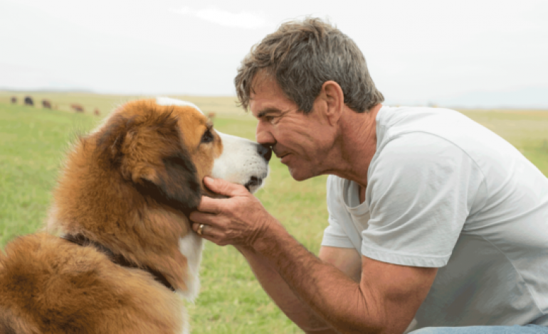 Movie Review – 'A Dog's Purpose'