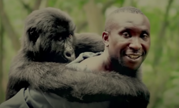 Documentary 'Virunga' Being Made into Feature Film with Barry Jenkins and Leonardo Dicaprio